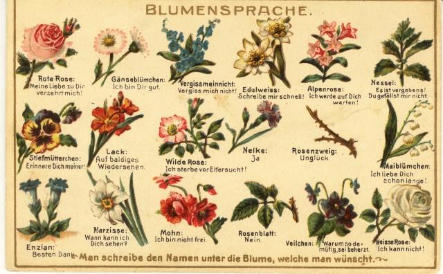 Bonjour d 39 une collectionneuse de cpa sur le langage for Langage des fleurs