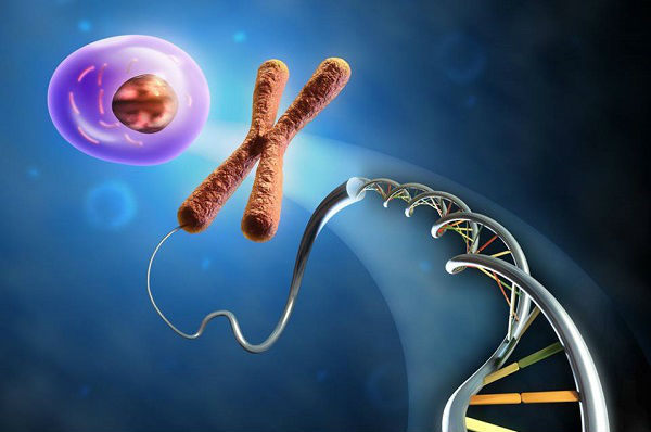لماذا تحتوي كل خلية في أجسامنا على حمض نووي؟